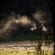 Calf Elk With Steaming Breath At Lost Valley Poster