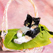 Calico Kitty In Basket Poster