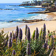 California Coast Flowers Photo Poster
