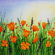 California Poppies Field Poster