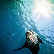 California Sea Lion, La Paz, Mexico Poster by Todd Winner