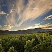 California Vineyard Sunset Poster by Matt Tilghman