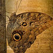 Caligo Poster