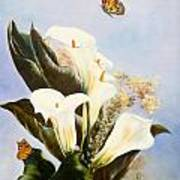 Callas And Butterflies Poster