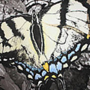 Callaway Tiger Swallowtail Butterfly Poster