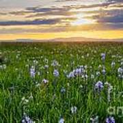 Camas Fields Poster by Idaho Scenic Images Linda Lantzy