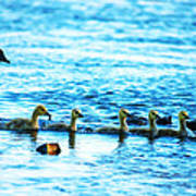 Canada Geese Family II Poster