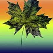 Canadian Maple Leaf Poster