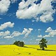 Canola Field And Clouds, Rathwell Poster
