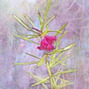 Captured Blossom Poster
