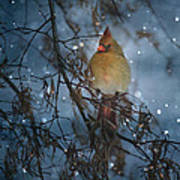 Cardinal In The Snowfall Poster