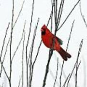 Cardinal In Willow  Poster
