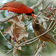 Cardinal Kisses Poster