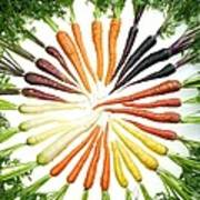 Carrot Pigmentation Variation Poster by Science Source