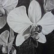 Cascade Of Orchidds Poster by Estephy Sabin Figueroa