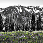 Cascade Range Meadow Poster