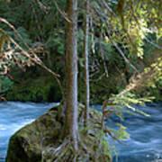 Cascade Rapids Poster