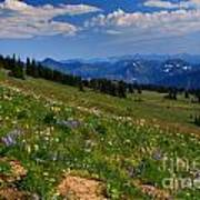Cascades And Wildflowers Poster