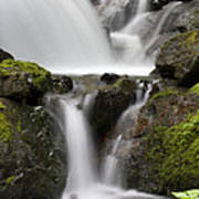 Cascading Creek In Temperate Rainforest Poster