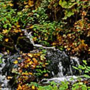 Casual Creek Poster