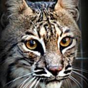 Cat Fever Poster