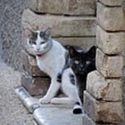 Cat Guardians Poster