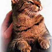 Cat Heaven Poster