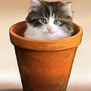 Cat In A Pot Poster