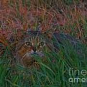 Cat In The Grasses Poster
