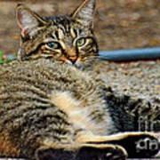 Cat Nap Interuption Poster