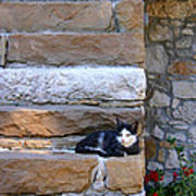 Cat On Stairs Poster