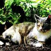Cat Relaxing In Garden Poster