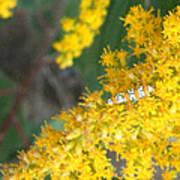 Caterpillar On Goldenrod Poster