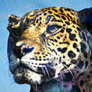 Cats Eyes - Leopard Poster