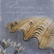 Catspaw Seashell Poster