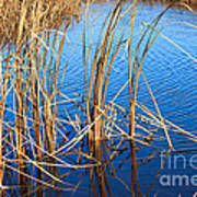 Cattail Reeds Poster by Ms Judi