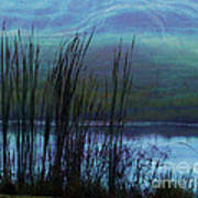 Cattails In Mist Poster