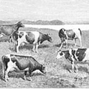Cattle, 1888 Poster