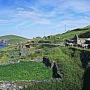 Cattle On The Road, Slea Head, Dingle Poster