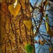 Changing Leaves And A Cottonwood Trunk Poster