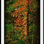 Changing Seasons Poster