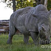 Charging Rhino. Poster