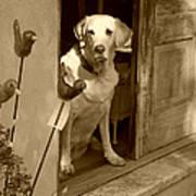 Charleston Shop Dog In Sepia Poster