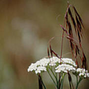Cheatgrass And Common Yarrow Poster