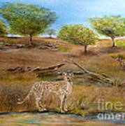 Cheetah Stops To Take A Drink Poster