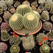 Chelsea Flower Show Cacti Display Poster