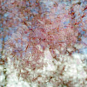 Cherry Blossom Abstract Poster