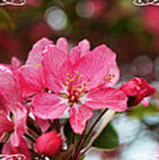 Cherry Blossom Greeting Card Blank With Decorations Poster