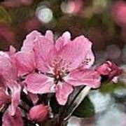 Cherry Blossom Photo Art And Blank Greeting Card Poster