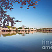 Cherry Blossoms Along The Tidal Basin Poster